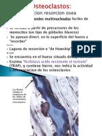 Osteoclastos - oscificacion (inicio)