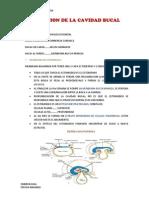 EMBRIOLOGIA 2dO HEMISEMESTRE 2