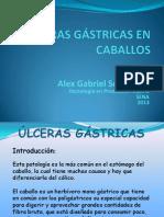 ÚLCERAS GÁSTRICAS EN CABALLOS