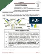 Guia Inmunidad Patologias 2013