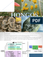 hongos y reproducción
