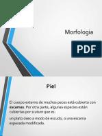 morfologia peces