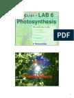 101 Lab 6 photosynthesis  Tutor template 2011.pdf