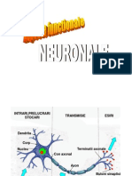 A05 Functii neuronale.ppT