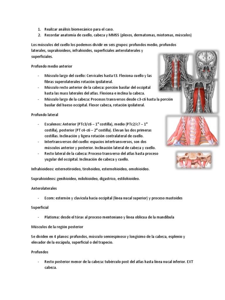 Asombroso Dermatomas De Cabeza Ideas - Anatomía de Las Imágenesdel ...