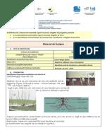 PH_29_materiaI de invatareS1 _Popa.docx