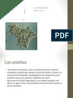 Las Amebas Andres Vives Juan Maldonado