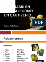 Giardiasis en Psittaciformes en Cautiverio