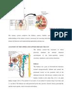 Anatomy and Physiology (kiLLKKLdney).docx