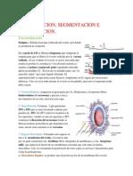 Resumen_Embrio_1er_Certamen.pdf