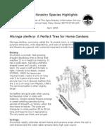 Moringa Trees 05022009
