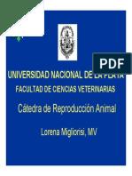 pdf-espermatogénesis