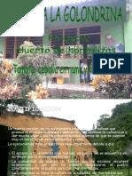 31807 - huerta de hortalizas.pptx