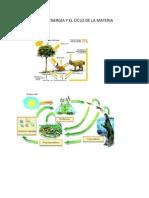 El Flujo de La Energia y El Ciclo de La Materia