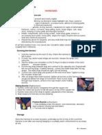 TBT Harnesses.pdf
