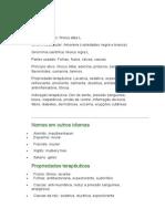 Amora - Morus alba L. - Ervas Medicinais - Ficha Completa Ilustrada