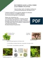 5._plantass