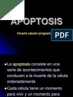 Apoptosis b