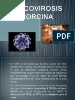 CIRCOVIROSIS PORCINA