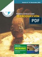Arowanas.pdf