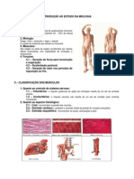 5.Sistema Muscular