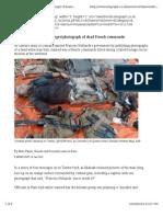 Al-Shabaab publishes alleged photograph of dead French commando.pdf