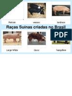 Raas de Suno Criadas No Brasil95