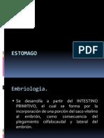 anatomiaestomago03-090516134719-phpapp02.ppt