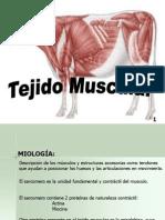 Presentación tejido muscular