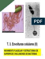 Envolturas Celulares II Flagelo y Estructuras de Superficie e Inclusiones,Envolturas Celulares II Flagelo y Estructuras de Superficie e Inclusiones,microbiologia generale,caracteristica generale de una celula,Envolturas celulares,INCLUSIONES DE RESERVA,CAPAS SUPERFICIALES PARACRISTALINAS (CAPA S),RESPUESTAS SENSORIALES SENSORIALES