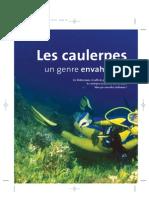 Caulerpes CalypsoLog 2004