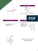 4 ARN Composicion y Funcion