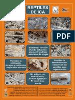 Afiche de Reptiles de Ica