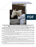 Researchers Create Equine Jugular Vein Injection Simulator