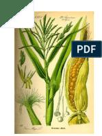 Corny (1)
