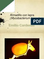 Armadillo Lab M Leprae