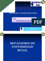 08 Mecanismos de Lesion Renal