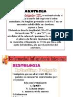 Copia de Enfermedad Intestinal