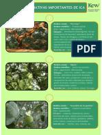 Ficha de Plantas Importantes de Ica