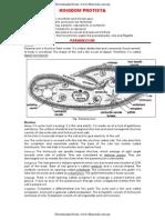 Biology _ Unit 4 Kingdom Protista