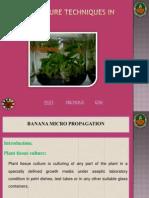 Banana Micro Propagation