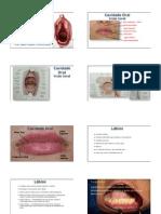 Cavidade Oral e Seus Componentes