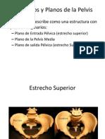 Pelvis Expo Inter