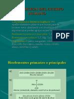 composiciondelserhumano1-090926232021-phpapp02