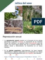 Tema 4. Alumnogenetica Del Sexo