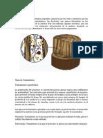 Bacterias en La Madera y Tratamientos