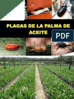 2 - PLagas de La Palma