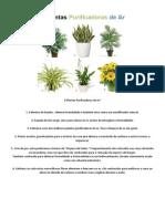 6 Plantas Purificadoras de Ar