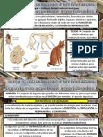 Tema 4. Metazoos Invertebrados Acuaticos