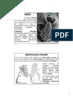 Morfologia Anatomia Plantelor  Frunza